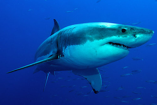 Sharketing 101: 8 lessons — from sharks! — on how to create a killer marketing strategy and devour your competition